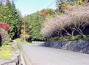 緑の公園1